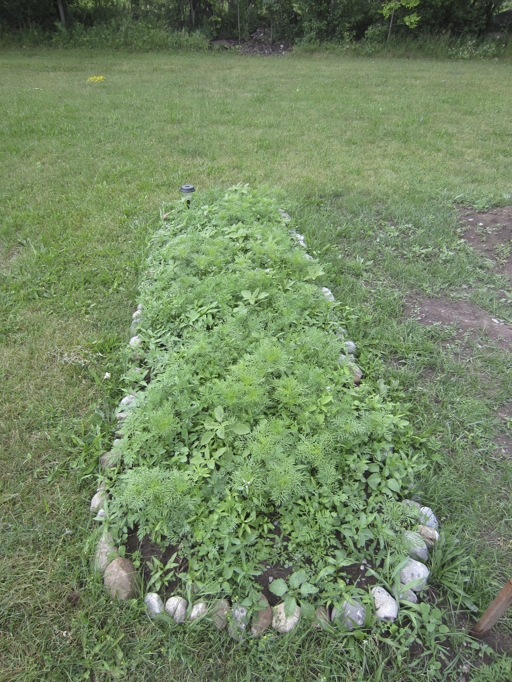 ontario gardens-147.jpg