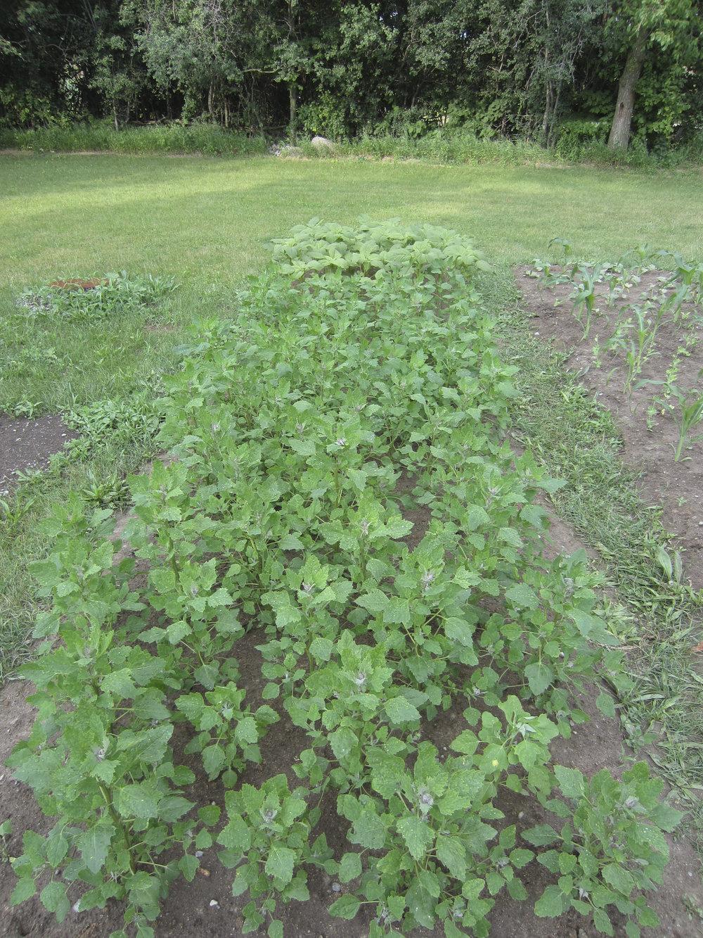 ontario gardens-149.jpg
