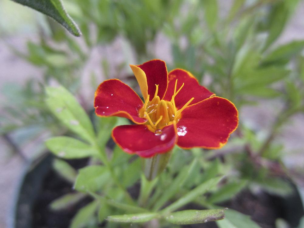 ontario gardens-151.jpg