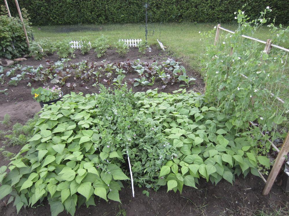 ontario gardens-153.jpg