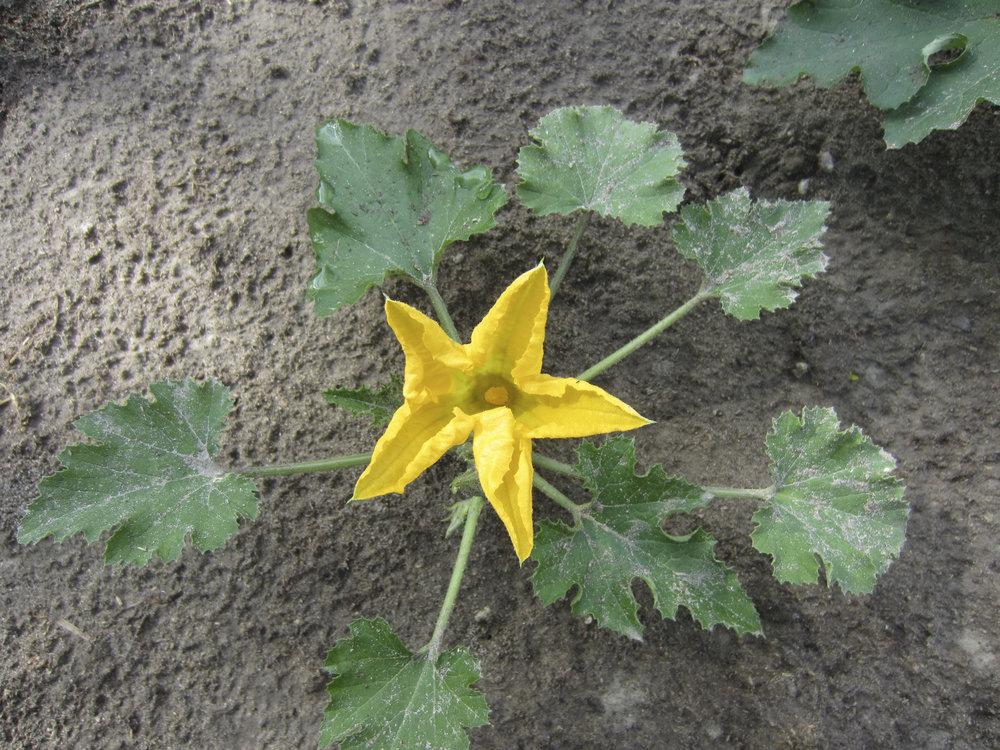 ontario gardens-160.jpg