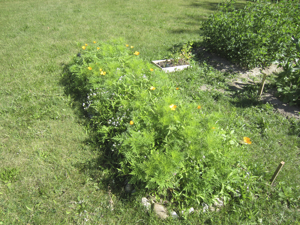 ontario gardens-192.jpg