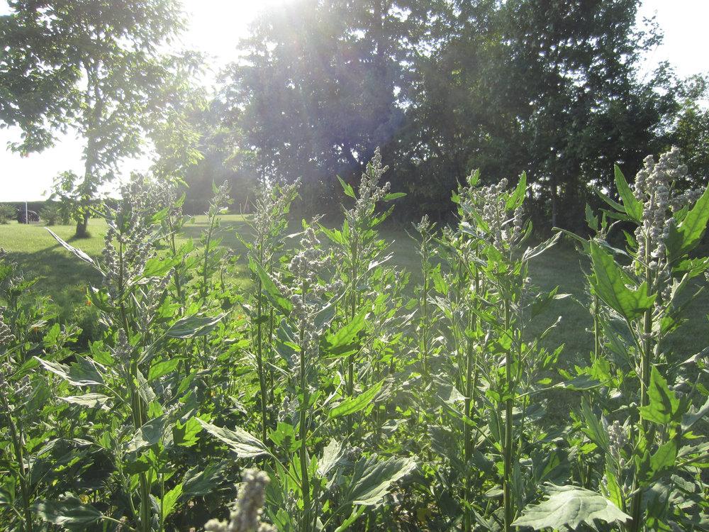 ontario gardens-215.jpg