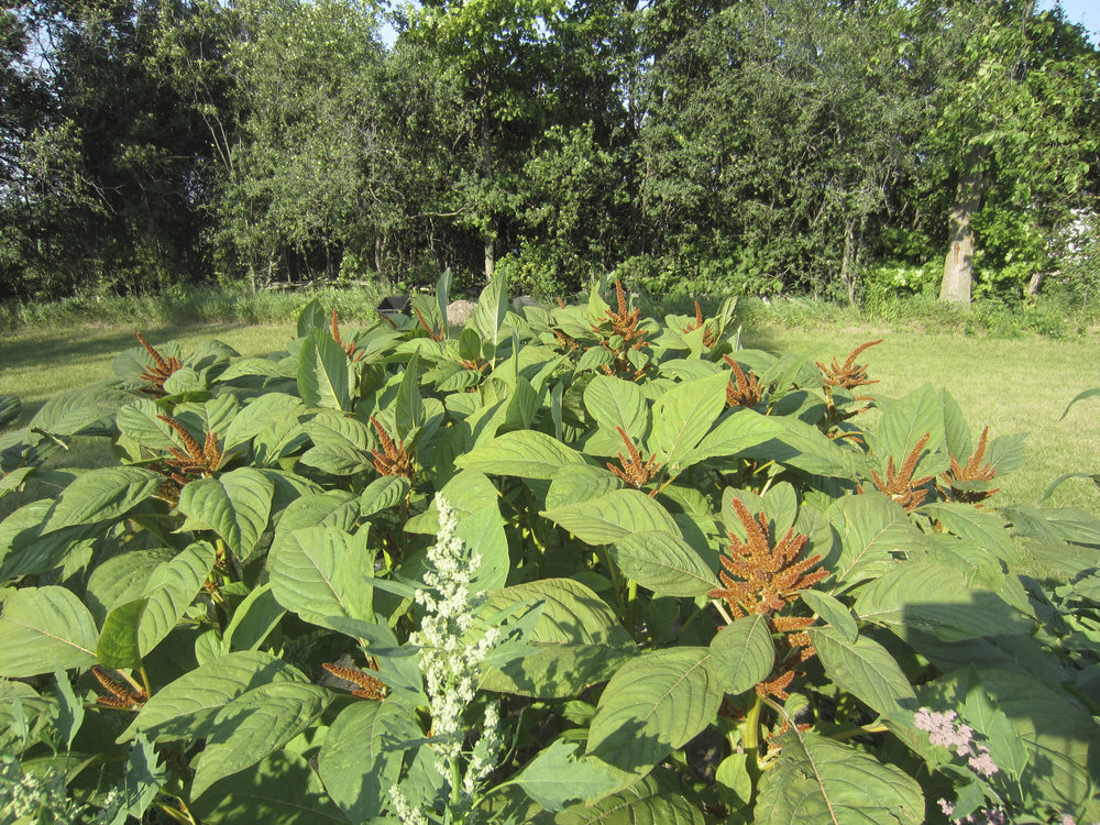 ontario gardens-223.jpg