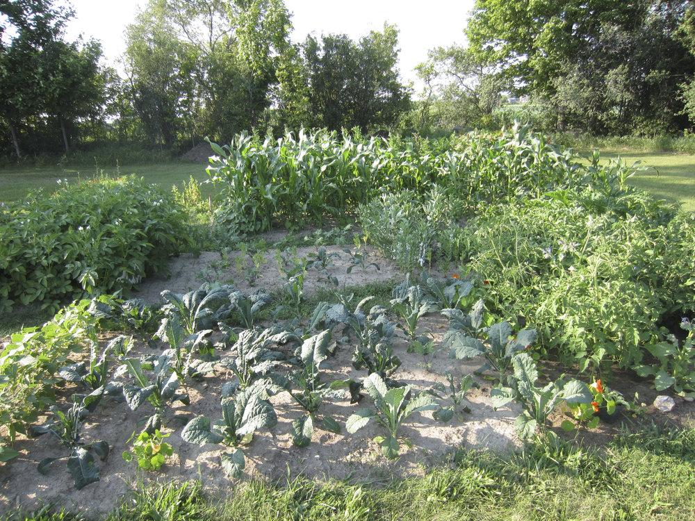 ontario gardens-225.jpg