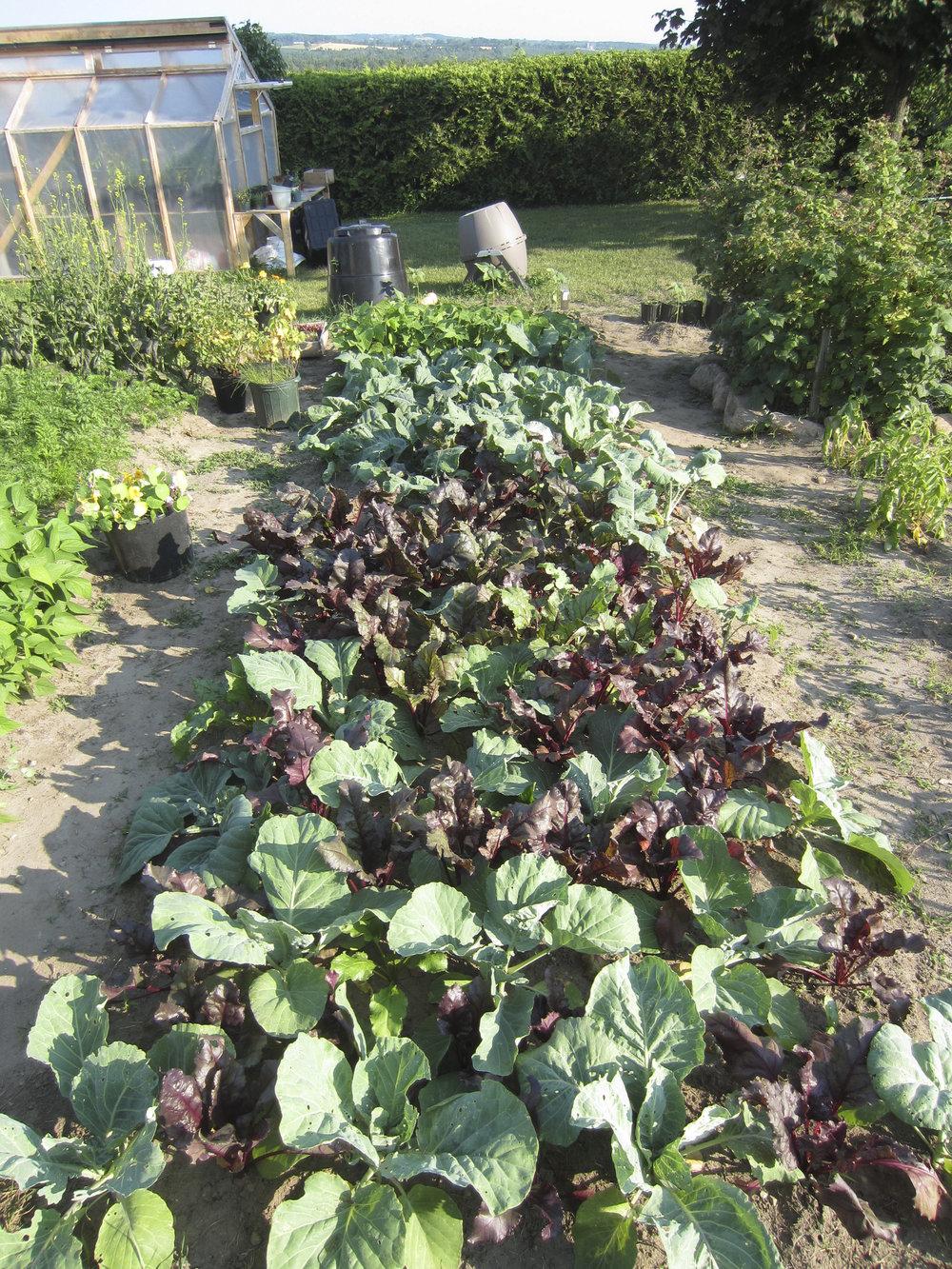 ontario gardens-234.jpg