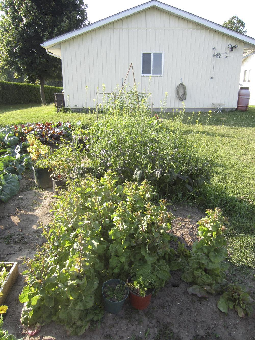 ontario gardens-238.jpg