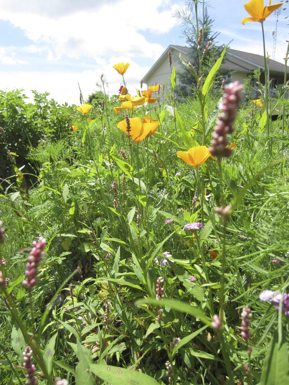 ontario gardens-243.jpg