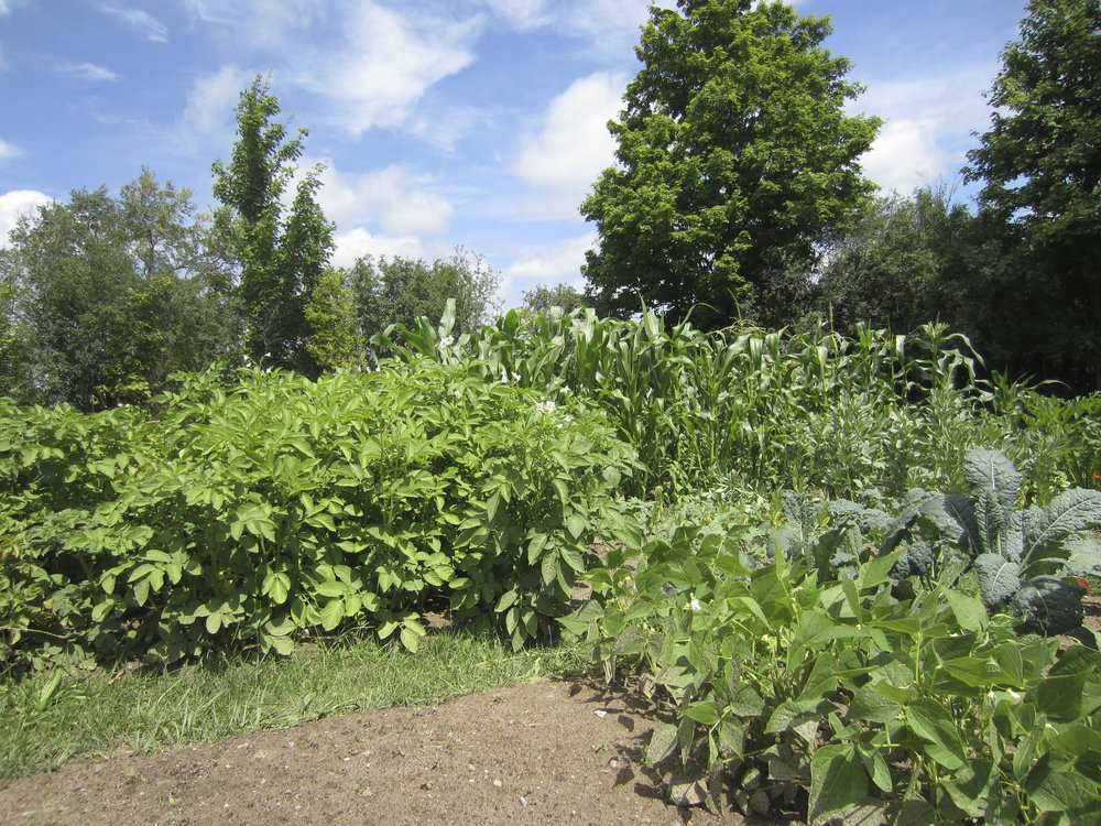 ontario gardens-250.jpg