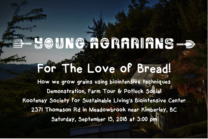 Workshop & Potluck - The Kootenay Society for Sustainable Living is teaming up with the Young Agrarians to host an event: For the Love of Bread!We'll start with a tour of our Research & Demonstration mini-farm, then dive in to a mini-workshop focused on how we grow grains using the Grow Biointensive method.Participants will learn how to start grains in flats, how to transplant in to the garden bed, how and when to harvest, how to thresh and winnow mature grains for storage, and finally how to mill grains to flour for making bread! (We'll even be including a simple and easy to make recipe for sourdough rye)Following the tour and workshop we'll be hosting a potluck dinner, including sourdough bread made from grains grown on site!  Please check out the Young Agrarians website for more event info, and follow the event on Facebook for updates!Young Agrarians WebsiteFacebook Event