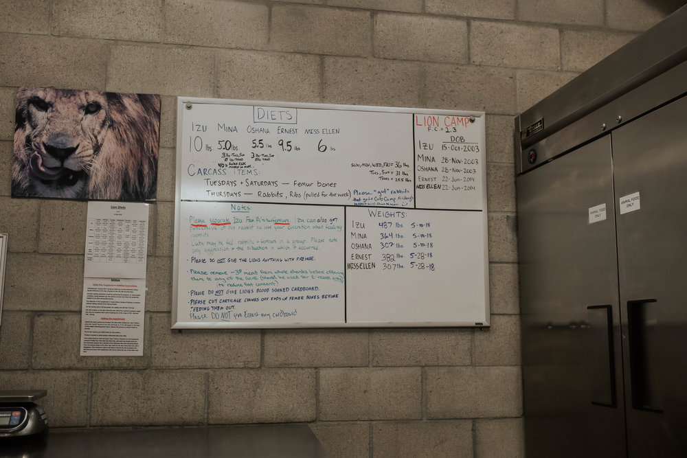 the lions' info board!don't feed Ernest any cardboard ;)