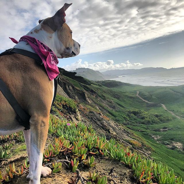 May your trails be crooked, winding, lonesome, dangerous, leading to the most amazing view. May your mountains rise into and above the clouds. • • • • • #pawsomeadventures #adventuredogsofficial #thegreatoutdogs #boxerpit #boxersofinstagram #dontbullymybreed #showusyourpits #rescueismyfavoritebreed #hikingwithdogs #thegreatoutdogs #dogsthathike #dogsinnature #offleash #thingsthatmakeyousmile #whatawonderfulword #doggiedaycamp #sfdogs #sfdogs #parvosurvivor #begrateful #momentslikethis #tailsandtrails #gratefulforitall