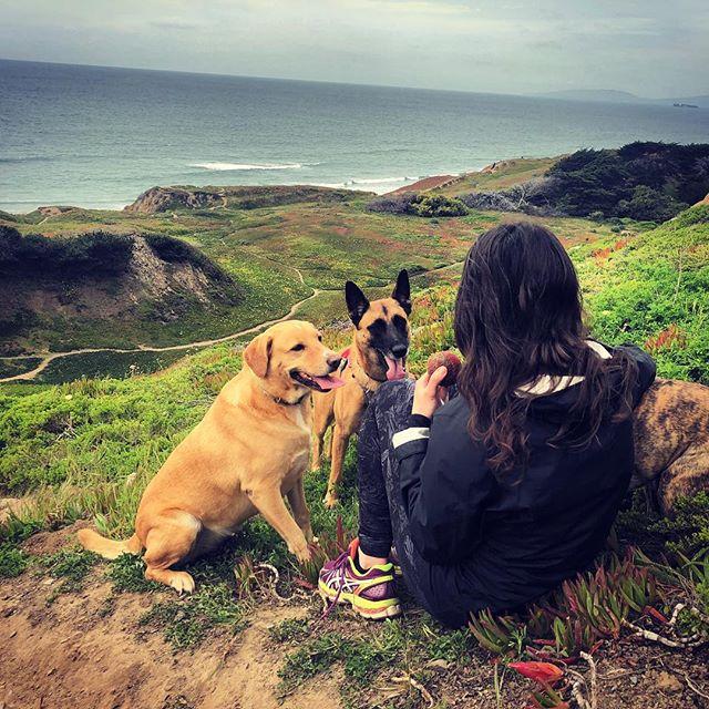 Ruff life. • • • • • #pawsomeadventures #adventuredogsofficial #happytrails #thegreatoutdogs #boxerpug #boxersofinstagram #maligator #malinois #lablove #rescuesrock #hikingwithdogs #thegreatoutdogs #dogsthathike #dogsinnature #offleash #thingsthatmakeyousmile #whatawonderfulword #doggiedaycamp #sfdogs #sfbayareadogs #momentslikethis #tailsandtrails #gratefulforitall #fourpawsforward #oceansandmountains #throwtheball #puppack