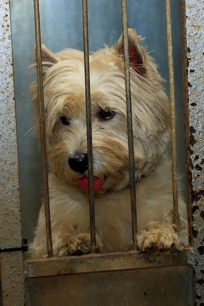 Hundepension - Kennel Roager - boks ved port med udsigtspost.JPG