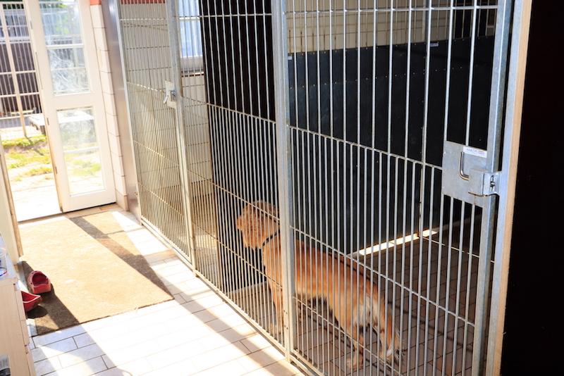 Hundepension - Kennel Roager - boksene ved indgangen.JPG