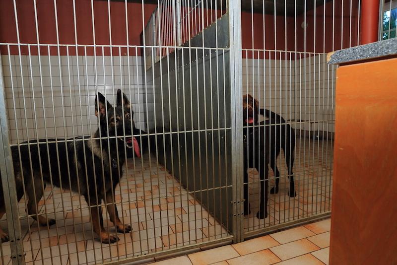 Hundepension - Kennel Roager - hunde i dobbeltboksene.JPG