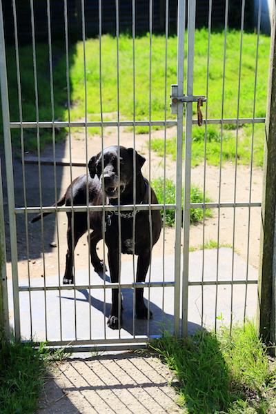 Hundepension - Kennel Roager - høje indhegning mellem stald og lade.JPG