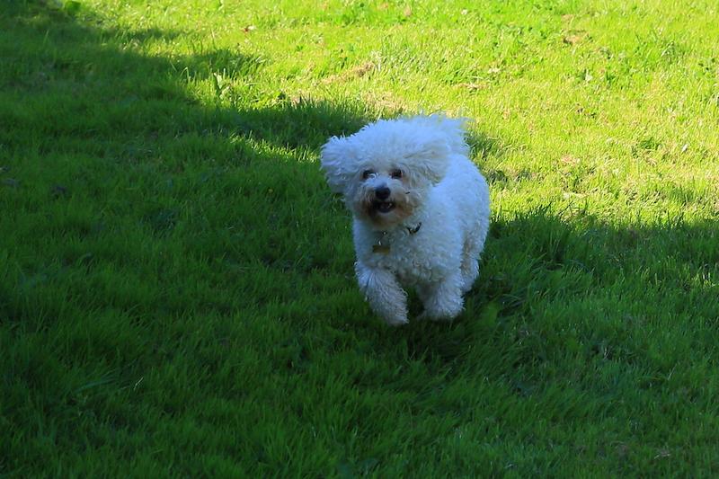Hundepension - Kennel Roager - pensionshund i skygge i lille have.JPG