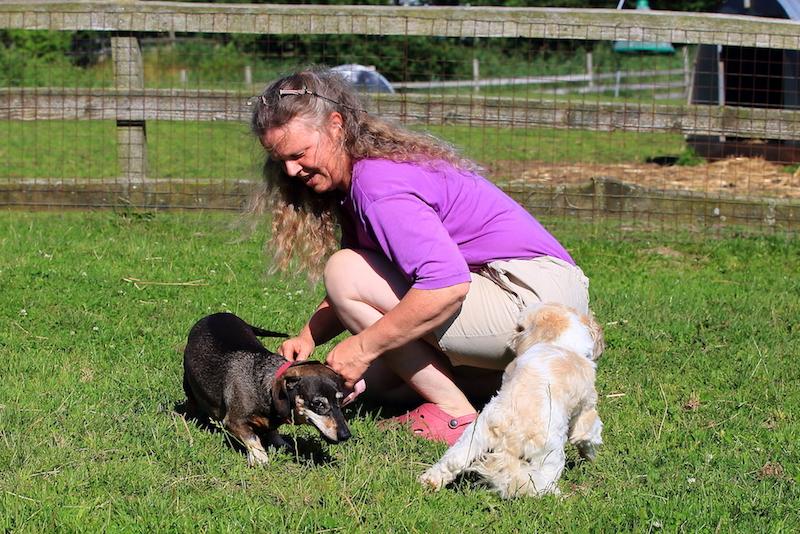 Hundepension - Kennel Roager - pensionshunde leger i midterstykket med Anita.JPG