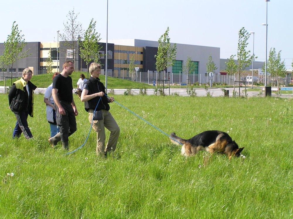 Schæferhan Roager´s Viktor & Brigitte på spor.jpg