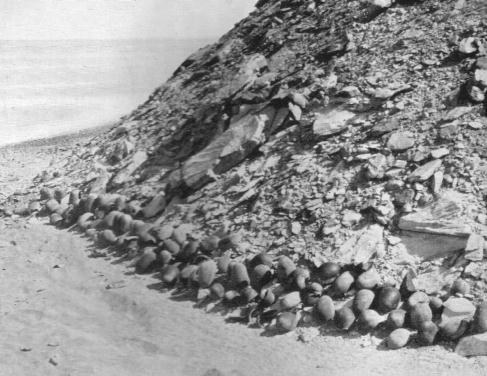 POTTERY HILL 1917