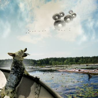 maury island dog.jpg