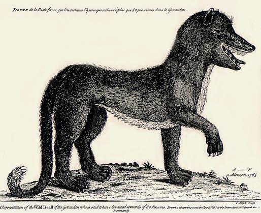 Gevaudanwolf.jpg
