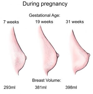 Pregnancy-Breast-298x300.jpg