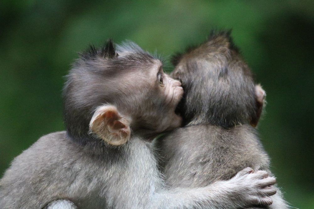 macaques-brothers-6.jpg