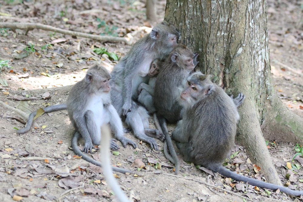 macaque-family-3.jpg