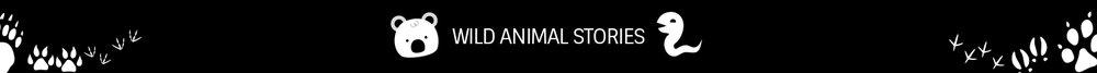 animal-world-stories.jpg