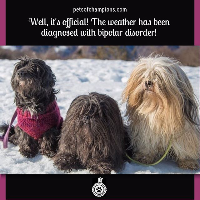 We thought that spring had kicked in, but it looks like winter is officially back! #dog #dogs #dogsofinstagram #doglife #doglover #doglove #instadogs #doggy #doggies #ilovemydog #dogoftheday #poodle #lhasaapso #pets #pet  #petstagram #petsofinstagram #petsofchampions