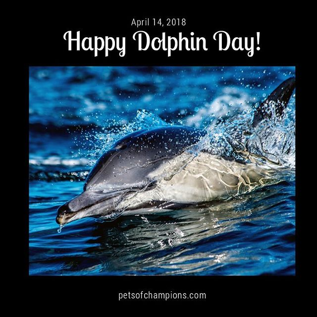 Dolphins have a whole day dedicated to their existence for a good reason, as some species of dolphin are endangered, and the biggest threat to their future is man. Let's raise awareness for the protection of these beautiful creatures by finding out a little more about them. 🐬 #NationalDolphinDay #dolphins #savethedolphins #dolphinsfan #cetacean #underwater #seaworld #dolphin #dolphinlove #dolphinpose