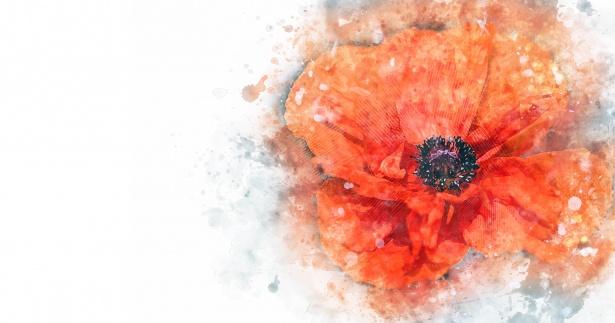 poppy-flower.jpg