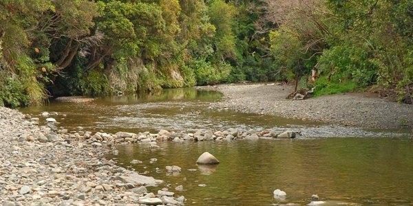 sf-river-2.jpg.600X300 (1).jpg