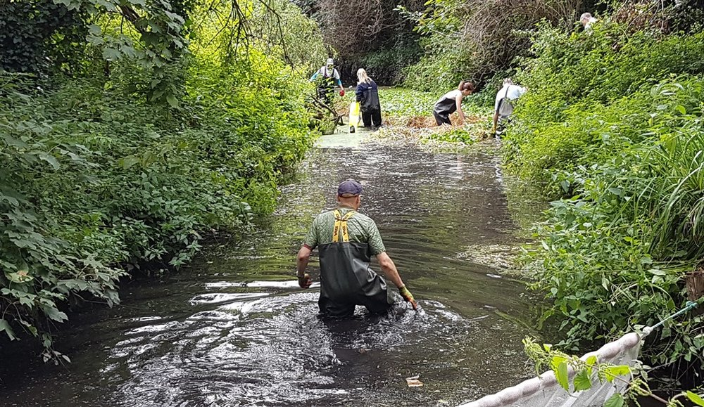 Rewilding a stream in Hailsham in East Sussex