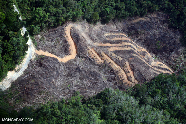 Deforestation for palm oil in Borneo, Southeast Asia