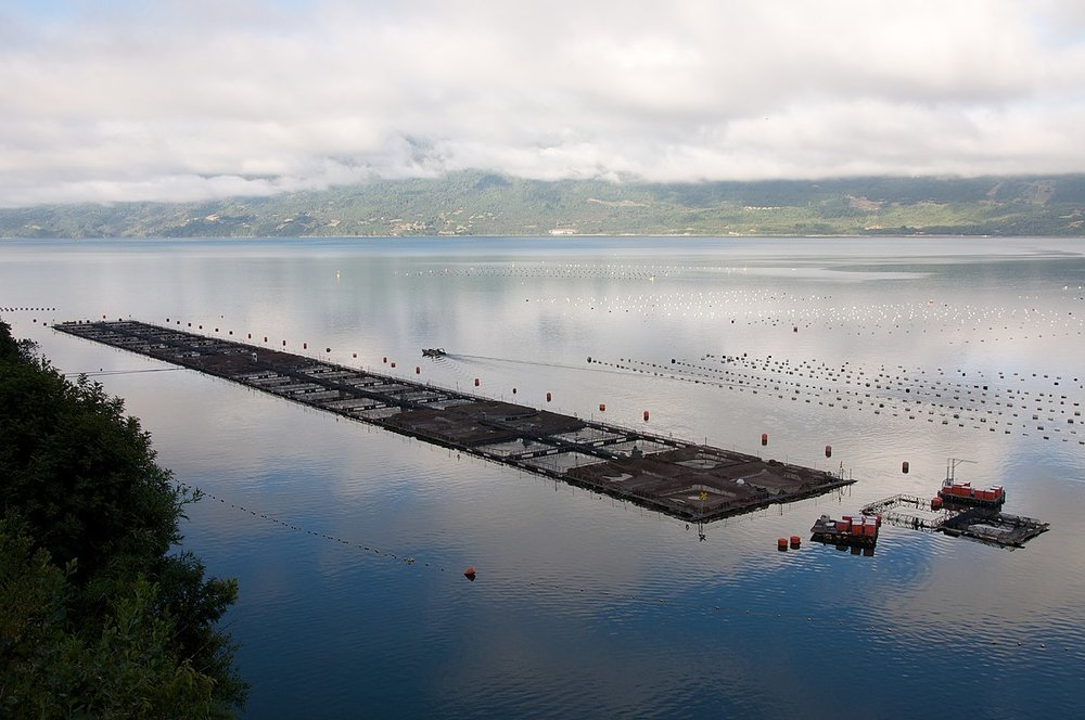 1200px-Farmed_salmon_net_pens_-_panoramio.jpg