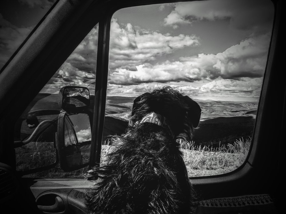 "A dog's view from the ""Top of the World"" Highway...how many smells are within his reach?"