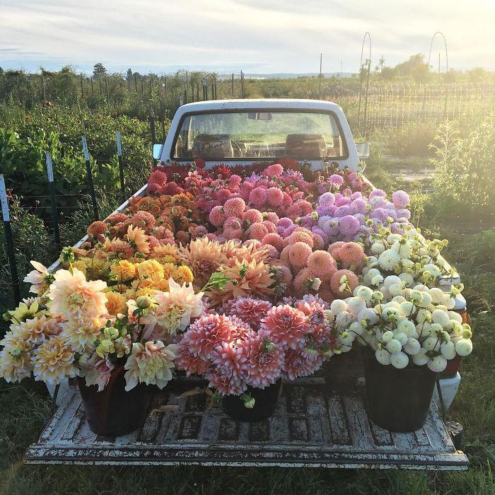Image: Floret Flowers Market