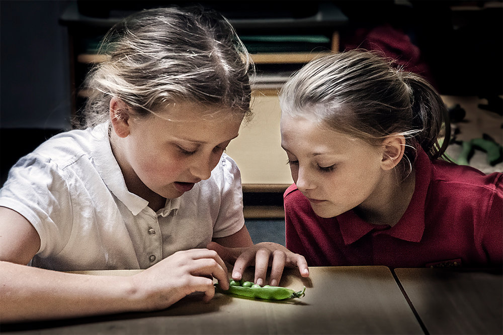 2 girls study pea pods.jpg