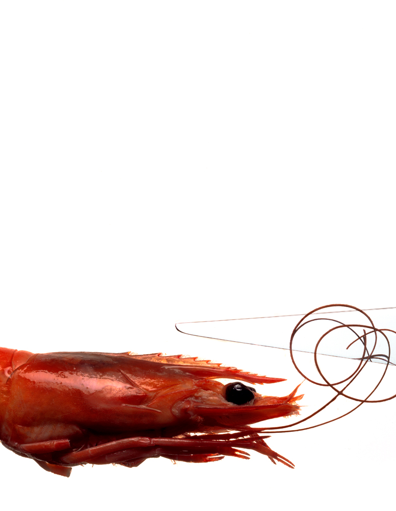 cooked prawn and knife...153.jpg