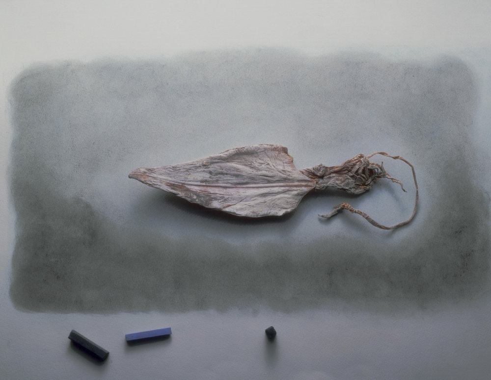 dried squid and pastels  .jpg
