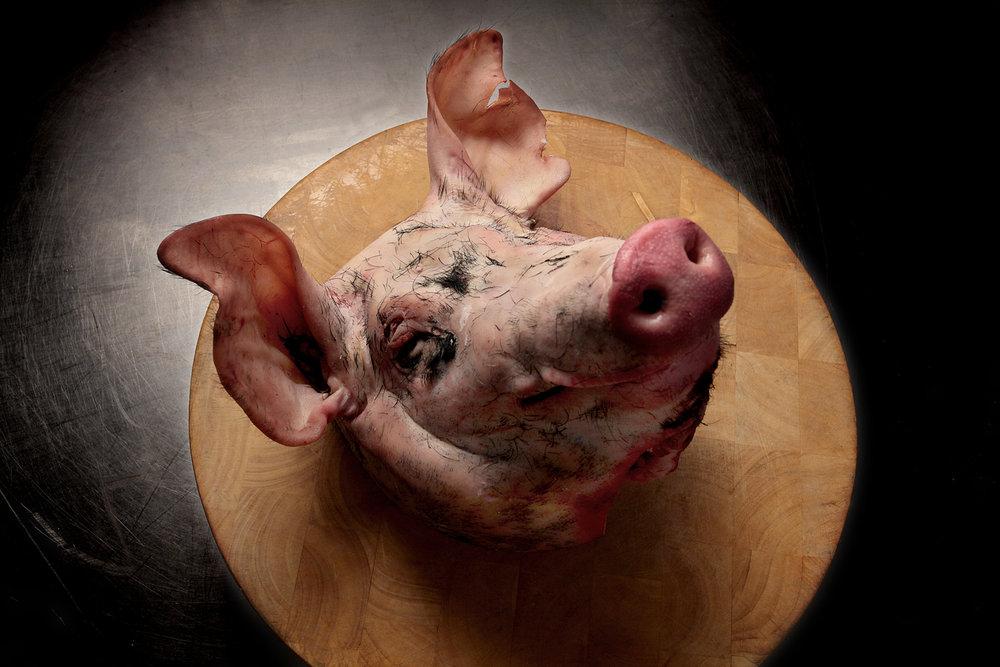 pigs head...27.jpg