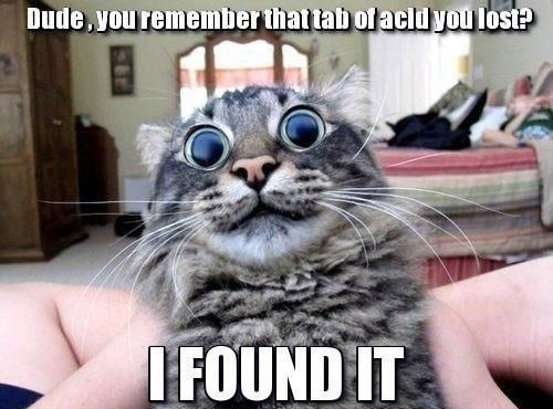 funnycats.jpg