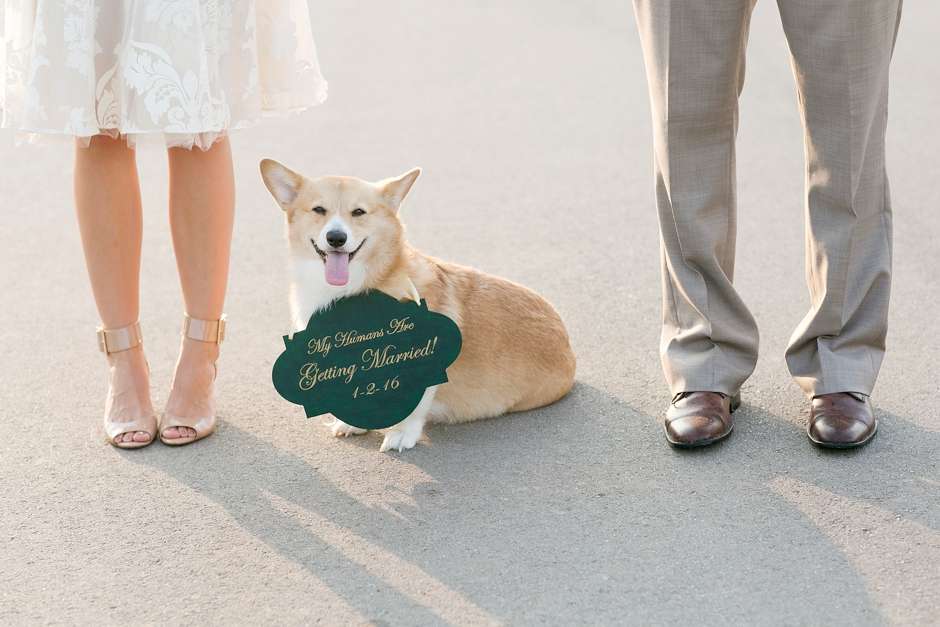 keeneland-engagement-photos-corgi-bluegrass-ky-equestrian-036