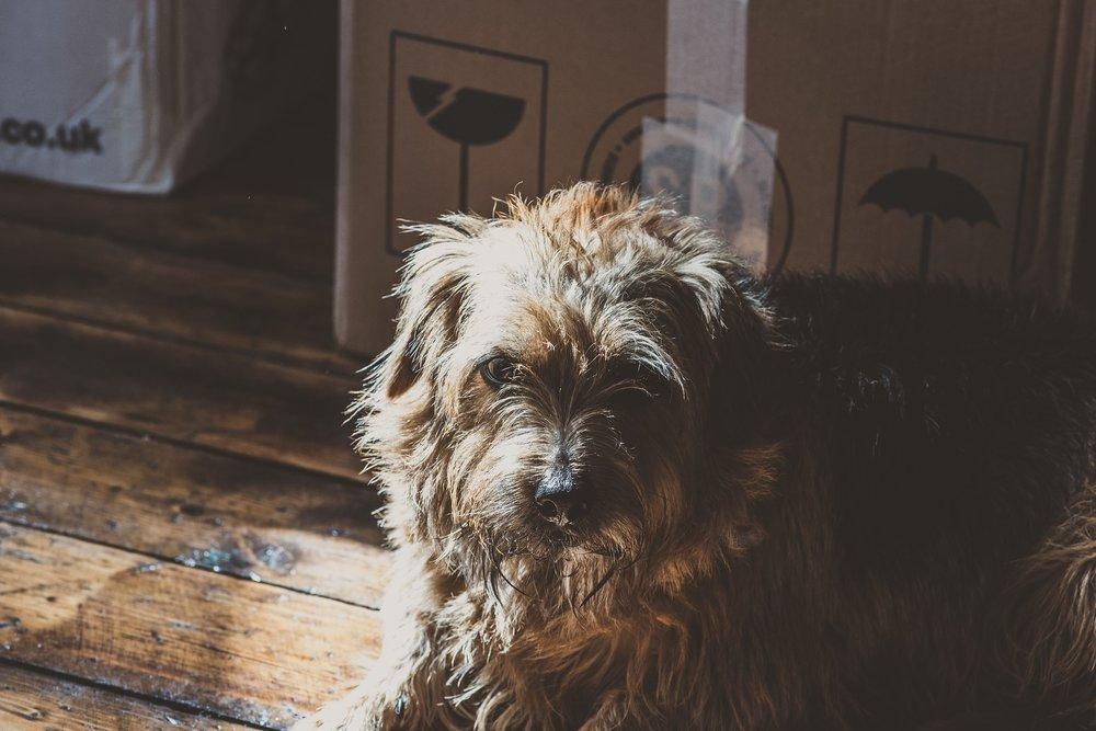 dog-2595646_1920.jpg