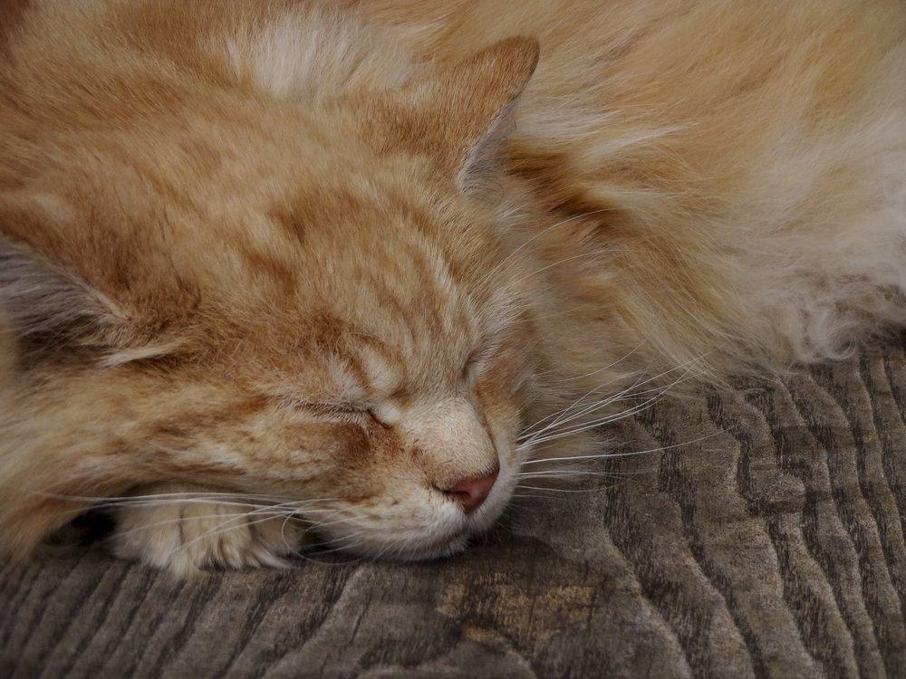 ginger-cat-2861326_1920.jpg