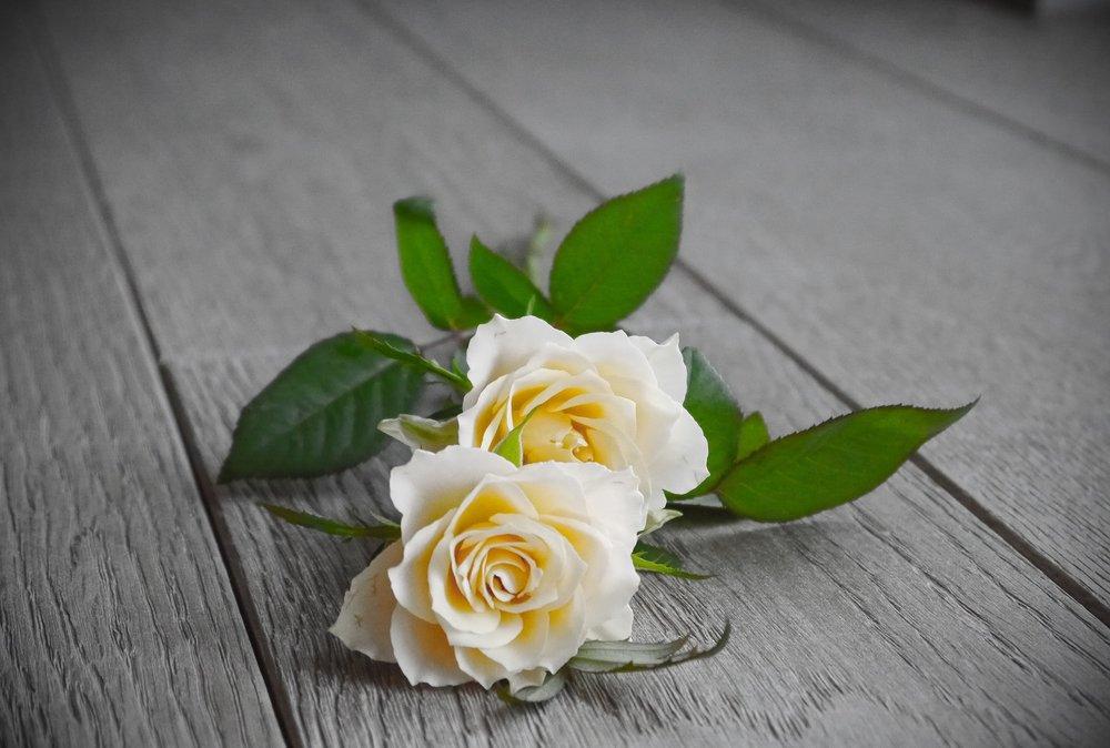 roses-2218696_1920.jpg