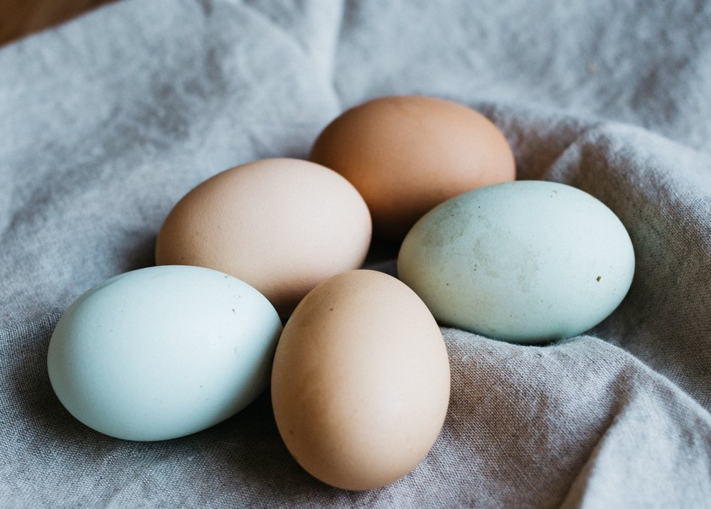 Chicken Run - Enjoy farm fresh eggs daily from our very own chickens.
